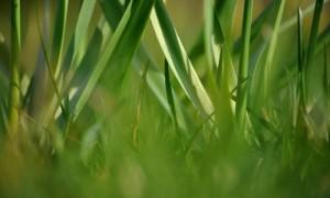 Ein schöner Rasen ohne Unkraut