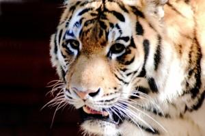 Tierische Rekorde – die Weltmeister im Tierreich