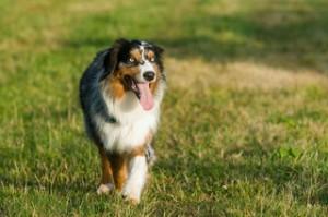 Das richtige Hundefutter ist wichtig für einen gesunden Hund
