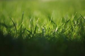 Einen Rasen anlegen – was muss man wissen?